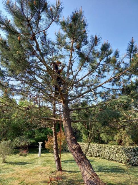coups de vent dans le pin 3